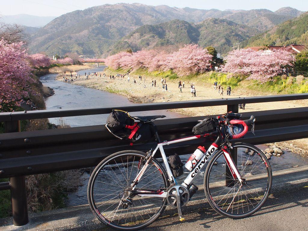 河津桜を見に伊豆を南下する